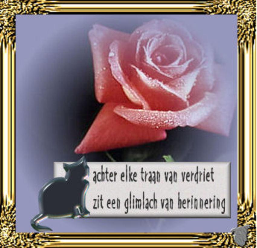 Jaar Heel Alleenstaande Je Op Erg J Als 31 Wel Ben Van Vrouw-52077