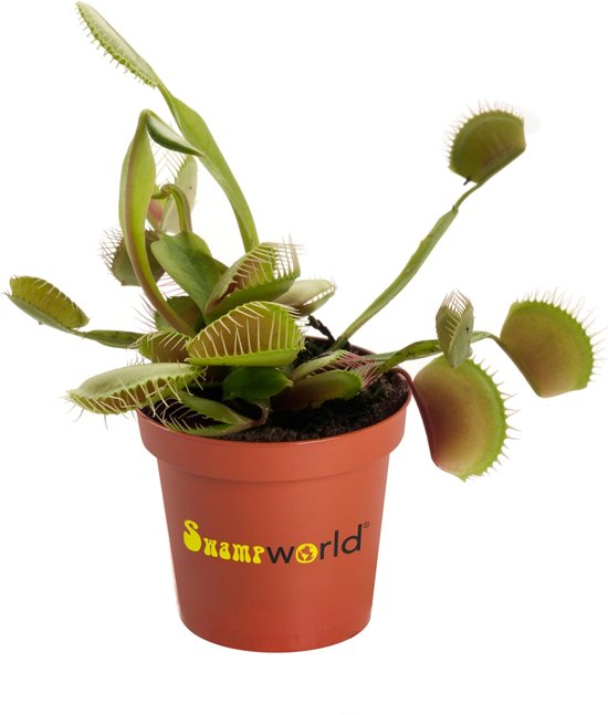Geen Dood Plantje Ben Jij-63595